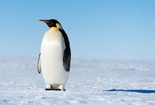 Watch out SEOs: new Penguin update before the end of 2015?