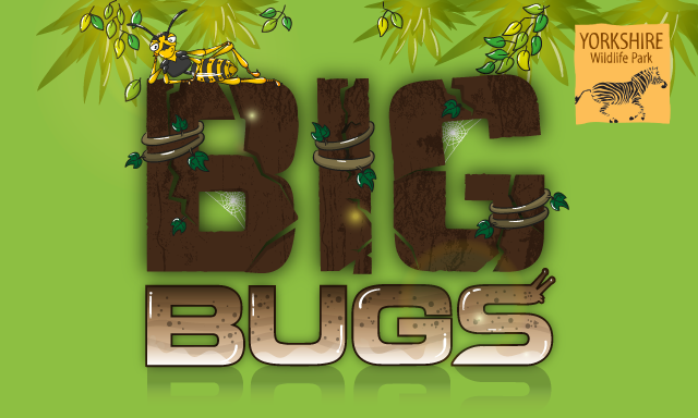 Big Bugs graphic