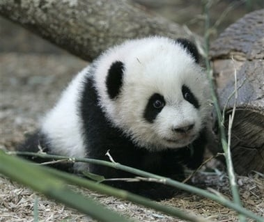 Panda is now part of Google's core algorithm: What you need to know